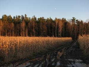 Fall at Jessups Falls
